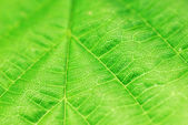 Textured green leaf — Stock fotografie