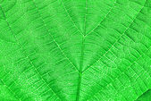 Textured green leaf — Stock Photo