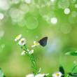 Beautiful Butterfly — Foto Stock