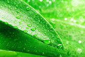 Green leaf and water drop — Stock Photo