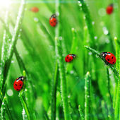 Dew on green grass — Stock Photo