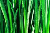 Goccioline sulle foglie verde — Foto Stock
