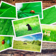 Plie of green nature pictures on wooden table — Stock Photo