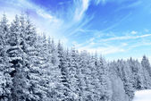 Trees with snow  — Stock Photo