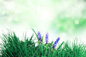 Flowers blooming in spring farm field — Stock Photo