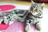 Cute tabby kitten — Stock Photo