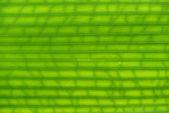 Folha de textura verde — Foto Stock