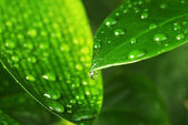 Green plant leaf — Stock Photo