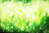 Blured bokeh background — Stock Photo