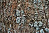 Tree's bark — Stock Photo