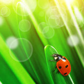Ladybug on green leaves — Stock Photo
