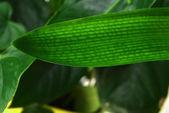 Green plant leaf — Stock Photo