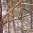 Small tit bird sits on tree branch in winter forest — Stock Photo #12215776