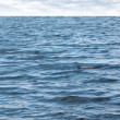 Small waves on pure blue sea water with cloudy sky on horizon — Stock Photo