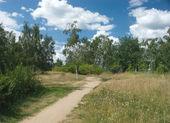 Natureza paisagem de verão — Foto Stock
