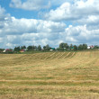 Rural summer landscape with mown field and a village at far — Stock Photo