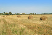 Hay rolls on cultivate field — Stock Photo