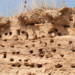 Swallow nests in sand on top of cliff - 图库照片