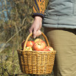 Wicker basket with apples in woman's hand — Stock Photo