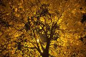 Tree in the night — Stock Photo