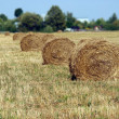Landscape with many hay rolls on cultivate field — Stockfoto
