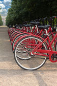 Many bikes standing in a park on summer day — Stock Photo