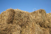 Dry hay against clear cloudless blue sky closeup — Stock Photo