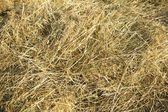 Lots of dry hay, photographed close up — Stock Photo