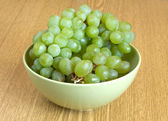 Grape on branch in green bowl close up — Foto Stock