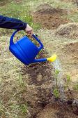 Frau Hand Wasser aus blauen Kunststoff-Gießkanne Pflanzen im Garten closeup — Stockfoto