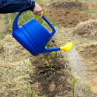 Woman's hand waters from blue plastic watering can plants in garden — Stock Photo