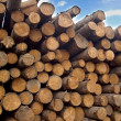 Many pine logs stacked closeup over sky with clouds — Stock Photo