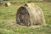 Landscape with many hay rolls on cultivate field — Stok fotoğraf