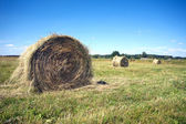 Landscape with many hay rolls on cultivate field — Foto de Stock