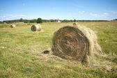 Paesaggio con molti rotoli di fieno su coltivare il campo — Foto Stock