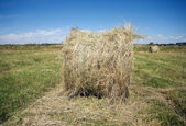 Landscape with hay rolls on cultivate field in summer — Foto Stock