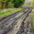 Dirt wet road in the forest — Stock Photo