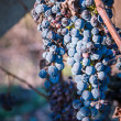 Dried blue grape — Stock Photo #35059225