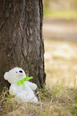 Bear under a tree — Stock Photo