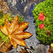 Autumn, red and yellow leaves on moss srones, wild river — Stock Photo
