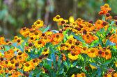 Prado de la flor — Foto de Stock