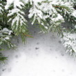 Branch of fir tree in snow - Photo