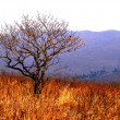 Autumn, tree on golden meadow — Stock Photo