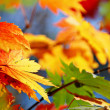 Autumn — Stock Photo #13618588