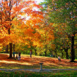 Autumnal park — Stock Photo #13618760