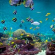 Fishes and coral, underwater life — Stock Photo #14076238