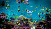 Fishes and coral, underwater life — Stock Photo