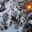 Sun through snow branches of fir - Stock Photo
