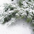 Snowbound branch of fir 3 — Stock Photo #14143763