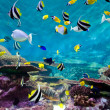 Fishes and coral, underwater life — Stock Photo #14716953